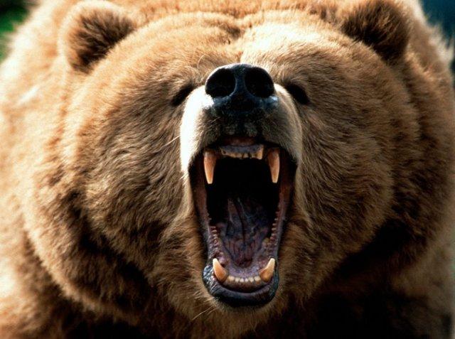 '></p><p>周五A股市场探底回升形成了一个荡气回肠的单日大涨行情,不过在前四日的恐慌性杀跌下,最终一周下来,A股依然是惨淡收场,很熊。。。沪指本周收跌2.17%,深证成指周跌2.26%,中小板指数周跌1.78%,创业板指数周跌1.46%。个股而言,自然以跌为主,并且跌势相当惨烈,周跌20%以上的65只,周跌10%以上的401只,周跌5%以上的1144只。</p><p>其中,皇庭国际以周跌36.01%成为本周个股跌幅榜的第一名。皇庭国际是一家主营连锁商业经营、房地产开发和物业管理的企业,主要经营资产就是深圳皇庭广场,号称深圳CBD的钻石之心,过去几年业绩比较都是高增长,业绩的较为优秀也让皇庭国际在10月之前其实今年股价表现还比较强势抗跌,不过在10月12日大跌并尾盘闪崩跌停后,皇庭国际开启了强势股快速不跌的一幕,连续大跌,最近两个交易日更是连续一字板跌停,截至周五收盘,其跌停板上仍躺逾17万手的封单。</p><p><img src=